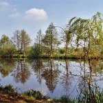 Der Teich 3