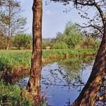 Teich 3 nahe des Vereinsheims